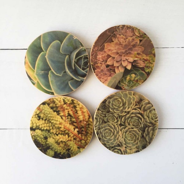 Creatively-daring-succulent-coasters