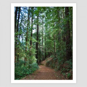 Photo print of St. Helena hiking trail